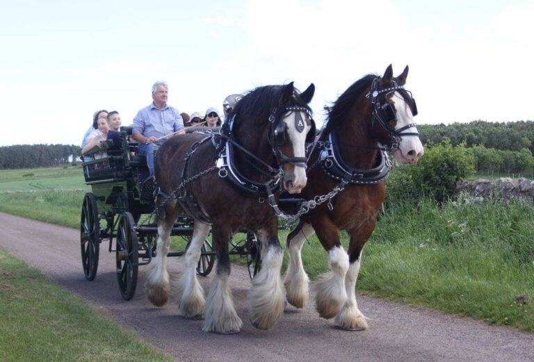 Hay Farm Heavy Horse Centre